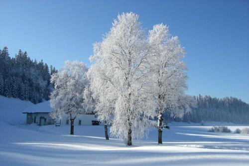 winterbild-eins